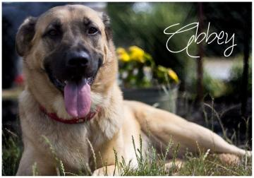 Abbey - Pet of the Week