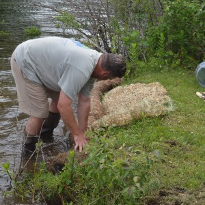 Matt Kerkhoff, president of Hoosier Aquatic management, Inc., installed a living log along the bank of Wawasee Area Conservancy Foundation's property on Lake Wawasee to stop shoreline erosion.