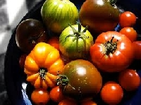heirloom-tomato-festival-heirloom