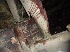 The death of a horse inside a barn stall is being investigated by the Kosciusko County Sheriff's Department. (Photos from Craigslist)