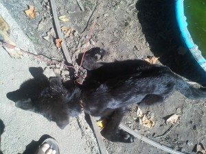 This German Shepherd puppy died after what Patrick Jamison said was about 2 weeks left with no food or water. (Photos and video provided by Patrick Jamison)