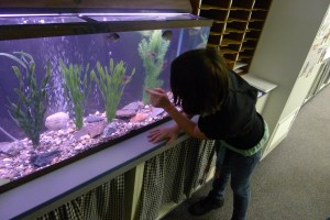 Shown is a student looking at a typical Lake in the Classroom aquarium set up with local plans and fish. The aquarium is designed to introduce students to what is living in local lakes, how they interact with each other and what can be done to protect real local lakes. (Photo provided)