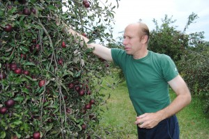 A community apple orchard in Kosciusko County produces not only 14 kinds of apples, but peaches, blueberries, pears and organic honey. Pictured is Michael Skipper, director of Community Apple Orchard, picking apples.