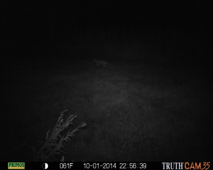 Mountain Lion Sighting in Northern Indiana