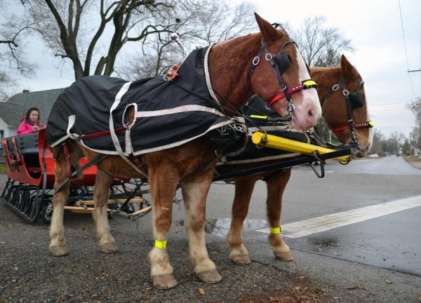 Red and Mack, along with their driver, Steve Cornelius, filled Syracuse streets with the sounds of hooves and sleigh bells. Riders were able to experience a wintertime sleigh ride that many only get to see in movies.