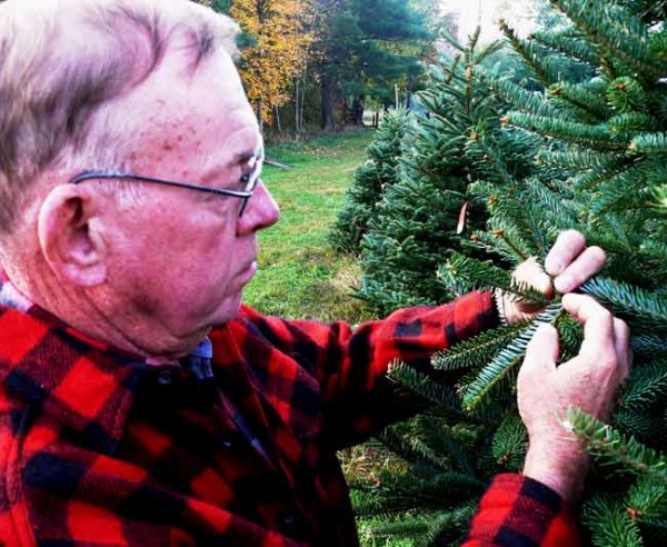 Dan Cassens, Purdue University professor of wood products, examines a Canaan (ka-NAYN') fir tree on his tree farm in West Lafayette, Indiana. (Purdue Agricultural Communication photo/Keith Robinson)