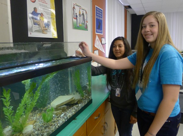 Lakeview students Sarah (right) and Jessica (left) feed the native fish that live in the aquarium in their classroom.