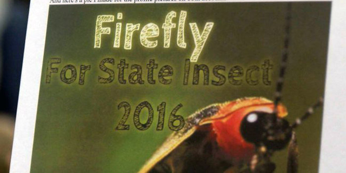 firefly for state insect