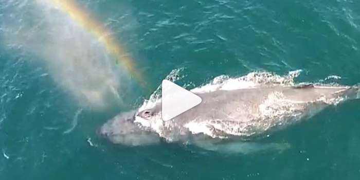 whale spouting rainbow
