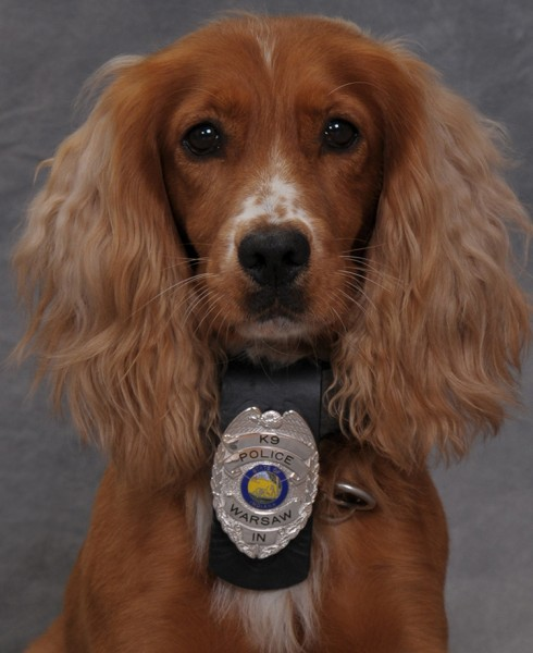 K-9 Bubka joined the Warsaw Police Department in July, becoming the department's first canine assigned to the narcotics unit.