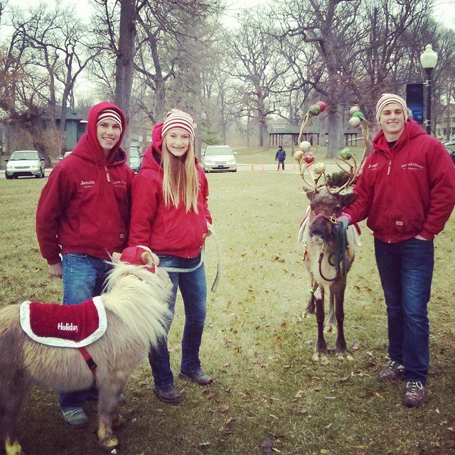 Guests at Kringlefest will have the opportunity to meet a live reindeer.