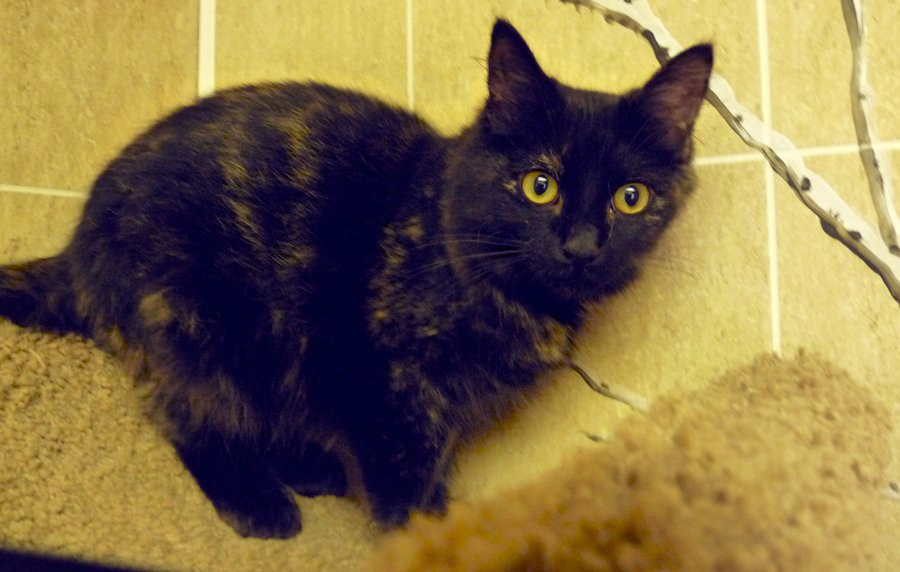 """Radish loves to be held and cuddled and would make a """"purrfect"""" companion."""