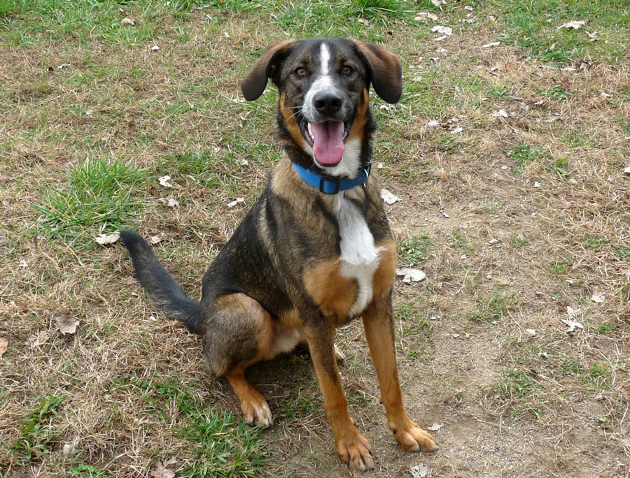 Zeek is friendly, outgoing and energetic looking for a home this holiday season.