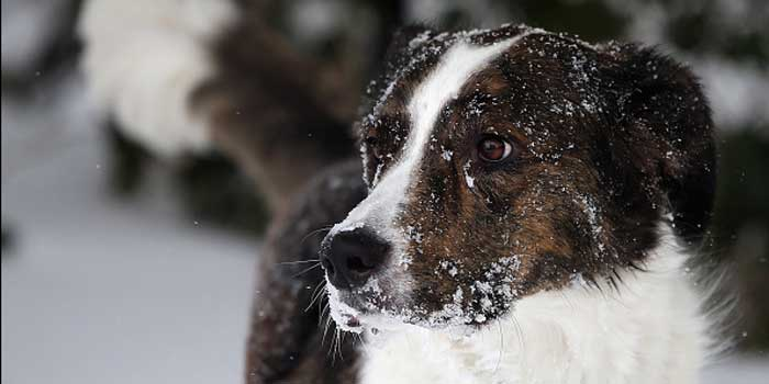 Indianapolis pet owners must bring their dogs indoors during extreme temperatures.