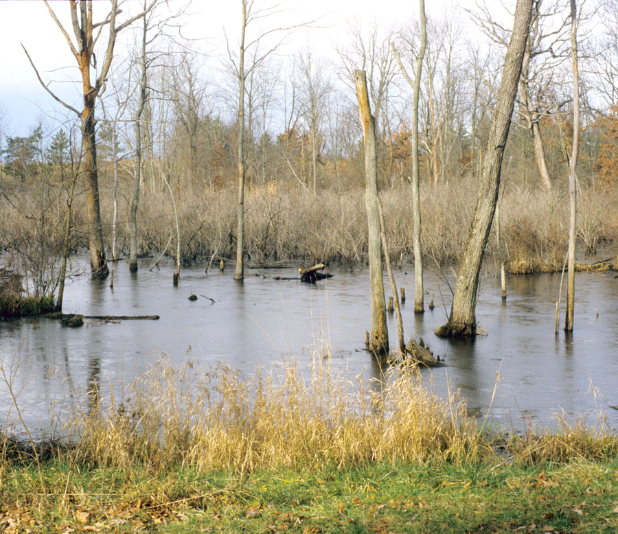 The-235.5-acre-Wildwood-has-a-small-pond-surrounded-by-forest-of-oak-and-hickory-and-a-variety-of-spring-wildflowers