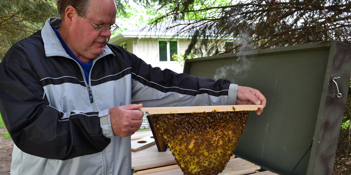 Stan Ide checking honeybees in his top-bar hive