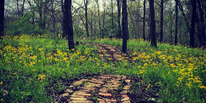 The path in the woods that leads to JoHannah Greene's childhood home. (photo provided)