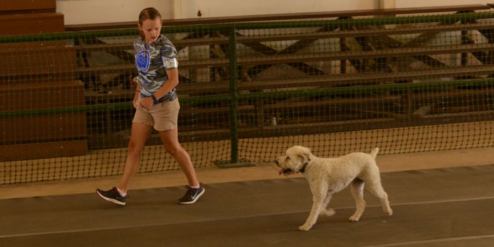Baxster faithfully follows Gracie Revere around the arena, off-leash.
