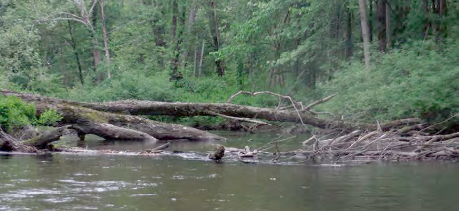 ONE OF THE JAMS — The Center for Lakes & Streams found approximately 273 log jams on the Tippecanoe River, like the one shown in the photograph. The final 35 jams, in the Warsaw area, should be removed by fall. (Photo by the Center for Lakes & Streams)